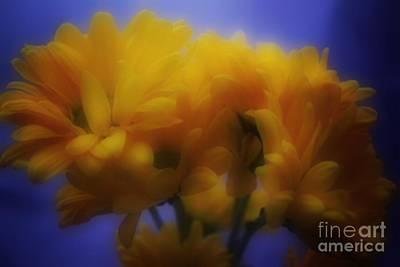 Photograph - Floral Dreams by Luther Fine Art