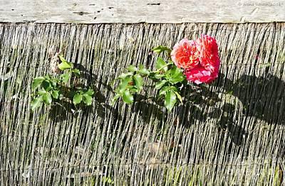 Photograph - Floral Escape by Ivana Westin