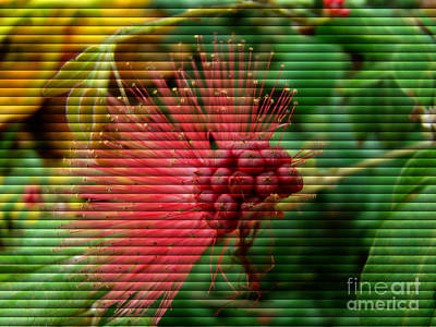 Photograph - Floral Fan by Sue Melvin
