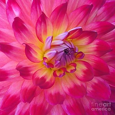 Photograph - Floral Fantasia by Patricia Strand