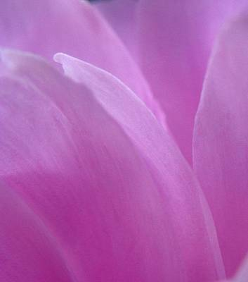 Photograph - Floral Fantasy 3 by Rhonda Barrett