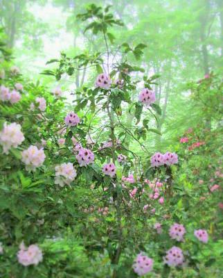 Photograph - Floral Fantasy by Deborah  Crew-Johnson