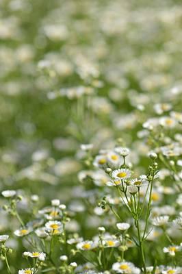 Floral Field #1 Art Print