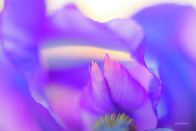 Photograph - Floral Form An Flow by Leland D Howard