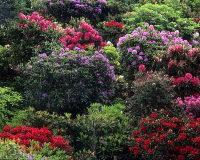 Rhodendron Photograph - Floral Garden-32 by Jerry Shulman