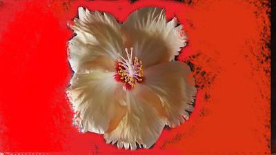 Studio Grafika Vintage Posters - Floral hibiscus by Nilu Mishra