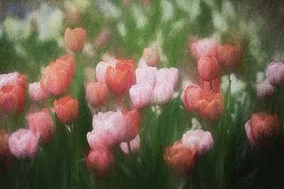 Photograph - Floral Impressions by James Barber