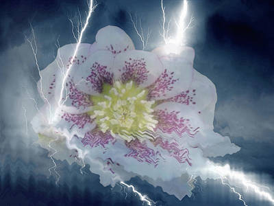 Mixed Media - Floral Lightning Reflections by Dennis Buckman