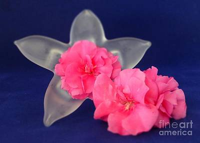 Photograph - Floral Love Pink Trio by Barbie Corbett-Newmin