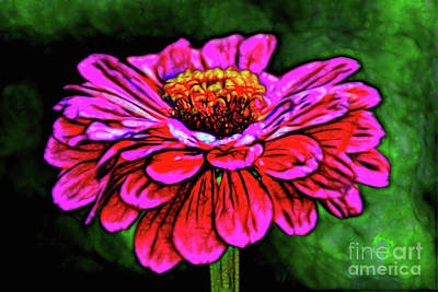 Photograph - Floral Lovely by Ray Shrewsberry