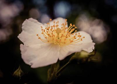 Photograph - Floral Macro by Lilia D