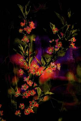 Photograph - Floral Oils by Sherman Perry