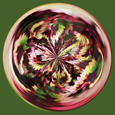 Art Print featuring the photograph Floral Orb by Bill Barber