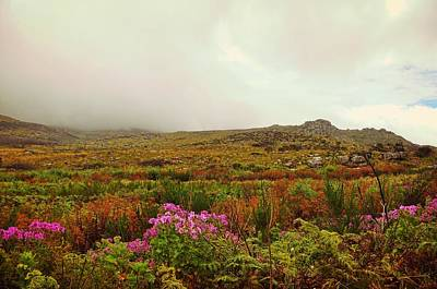 Photograph - Floral Plains by JAMART Photography