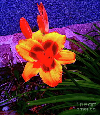 Photograph - Floral Play by Pamela Walrath