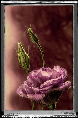 Photograph - Floral Polaroid Transfer by Garry McMichael