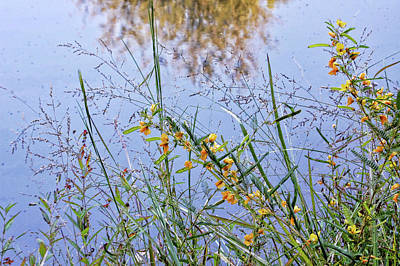Photograph - Floral Pond  by Amber Flowers