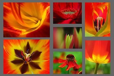 Sunflower Photograph - Floral Redzone by Juergen Roth