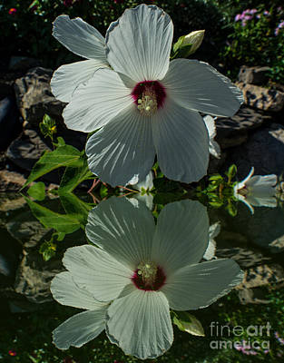 Photograph - Floral Reflection 2 by Kevin Fortier