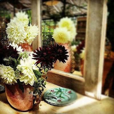 Florals Photograph - Floral Reflection  by Natasha Futcher