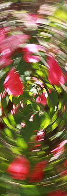 Photograph - Floral Spin No1 by David Coblitz