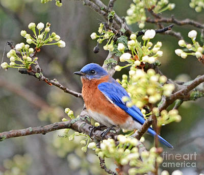 Photograph - Floral Spring Bluebird by Nava Thompson