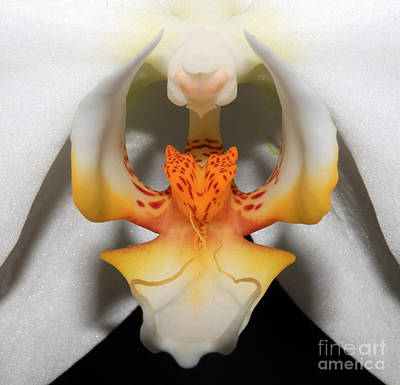 Suggestive Photograph - Floral Symmetry by Lee Langer