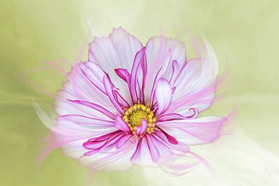 Floral Wonder Art Print