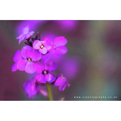 Florals Photograph - #floral by Zoe Illingworth Zi Photography