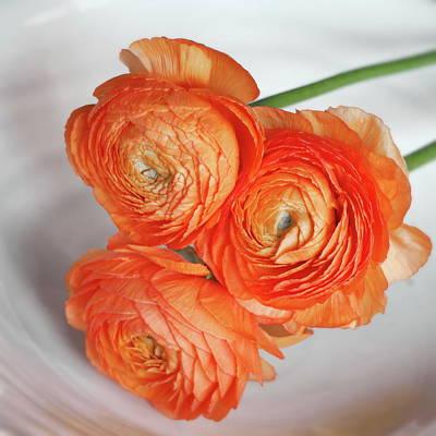 Photograph - Florals No. 4 by Steve Tobus