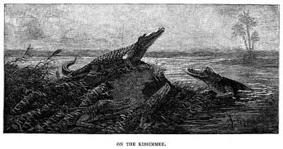 Florida Alligators, 1886 Print by Granger