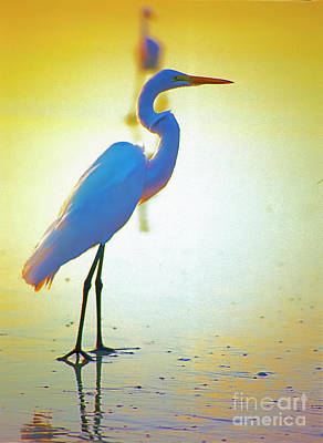 Florida Atlantic Beach Ocean Birds  Art Print