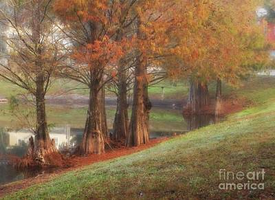 Photograph - Florida Bald Cypress by Marcia Lee Jones