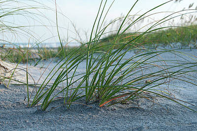Photograph - Florida Beach Grass by Mark Dahmke