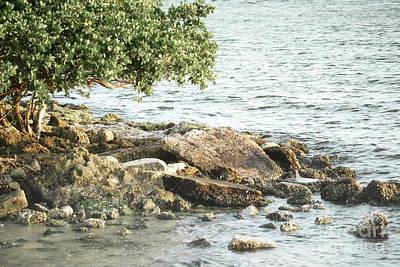 Photograph - Florida Beach Tree Landscape by Andrea Hazel Ihlefeld