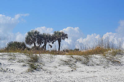 Photograph - Florida Beach With White Sand Dunes And Palms by rd Erickson