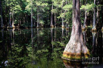 Photograph - Florida Beauty 4 by Andrea Anderegg