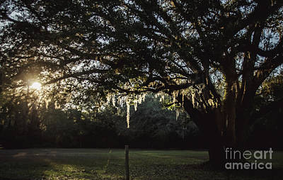 Photograph - Florida Beauty by Andrea Anderegg