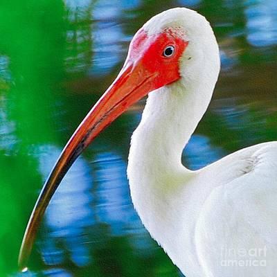Photograph - Bird by Buddy Morrison