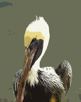 Browm Digital Art - Florida Brown Pelican by Allan  Hughes
