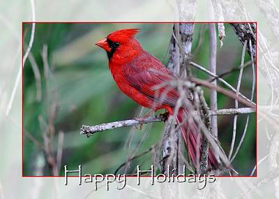 Photograph - Florida Cardinal by John Hintz