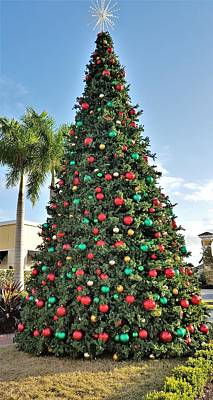 Tree Photograph - Florida Christmas by Ric Schafer
