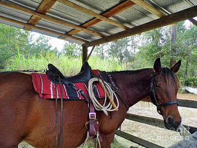 Photograph - Florida Cracker Horse by D Hackett