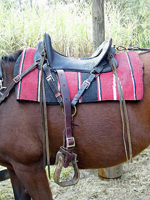 Photograph - Florida Cracker Saddle by D Hackett