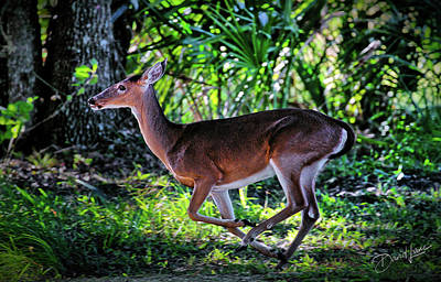 Florida Deer Art Print