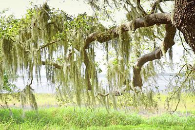 Photograph - Florida Dreamy Spanish Moss Tree Landscape by Andrea Hazel Ihlefeld