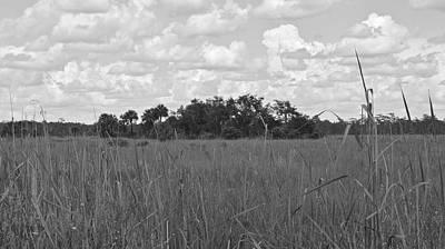 Photograph - Florida Everglades Fakahatchee Strand by Carol  Bradley