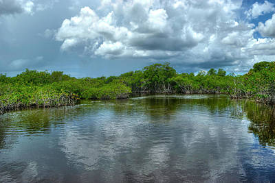 Photograph - Florida Everglades by Timothy Lowry