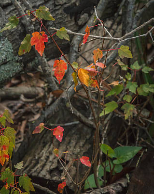 Photograph - Florida Fall Foliage by Jane Luxton
