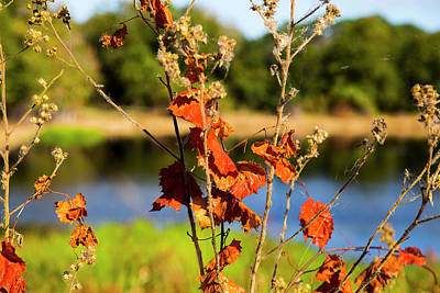 Photograph - Florida Fall Leaves by Dart and Suze Humeston